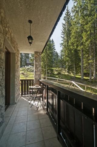 Bear - terrace
